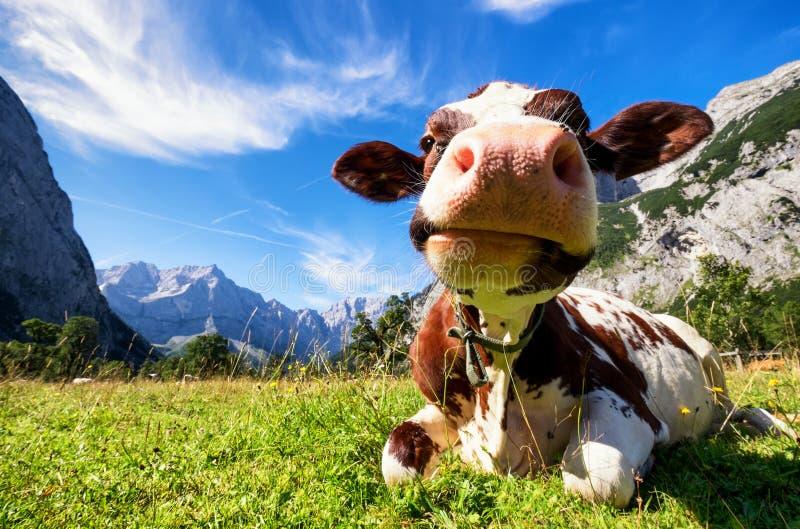 Karwendel mountains royalty free stock images