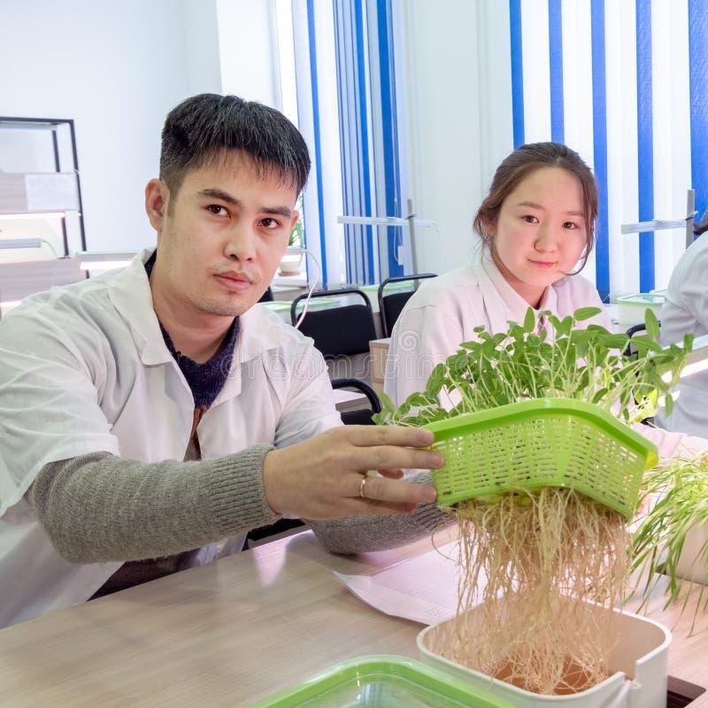 2019-09-01 Kasakhstan, Kostanay hydroponics Grabben visar att groddar med rotar Skolalaboratorium Växande gröna växter i vatten arkivfoton