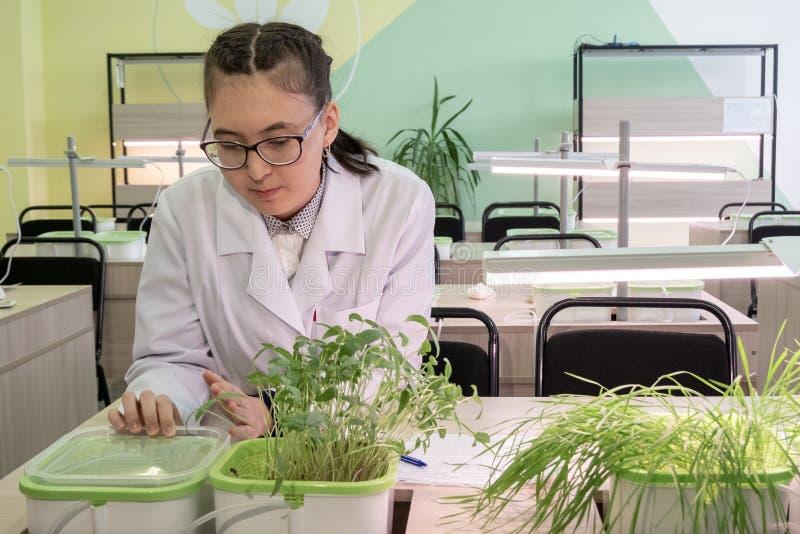 2019-09-01 Kasakhstan, Kostanay Växande växter vid hydrokultur i en högstadiumlaboratoriumgrupp En ung flickastudent i exponering arkivbilder