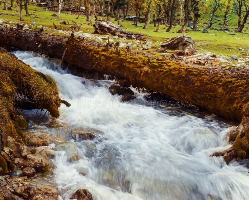Kashmir liten flod royaltyfri foto