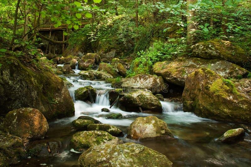 Kaskad med mossy rocks i skog arkivbilder