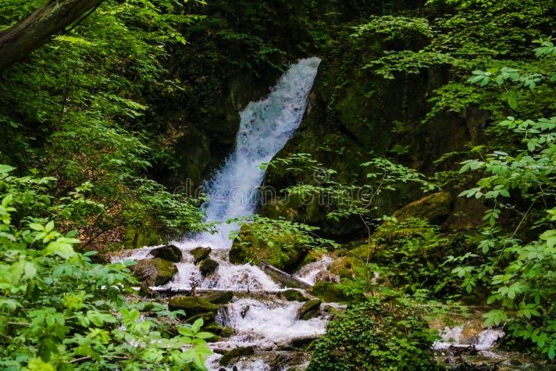 Kaskada mały siklawy spływanie przez lasu fotografia stock