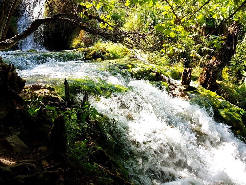 Kaskada siklawy i wiele rośliny na Plitvice jeziorach, Chorwacja zdjęcia stock