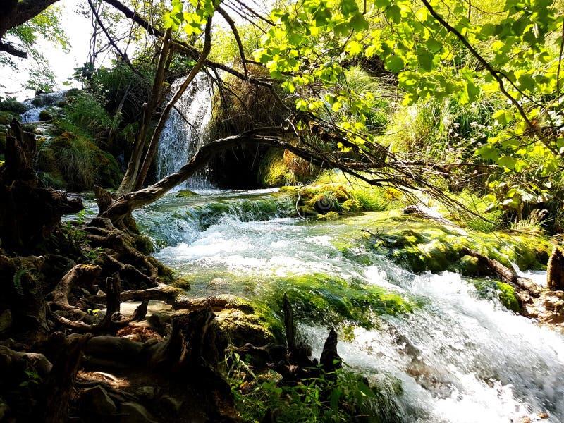 Kaskada siklawy i wiele zielone rośliny na Plitvice jeziorach, Chorwacja Szybcy wodni i zieleni drzewa zdjęcia stock