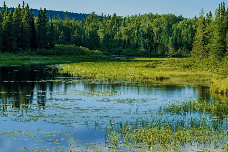 Kaskadowa rzeka, wyższy las państwowy obraz stock