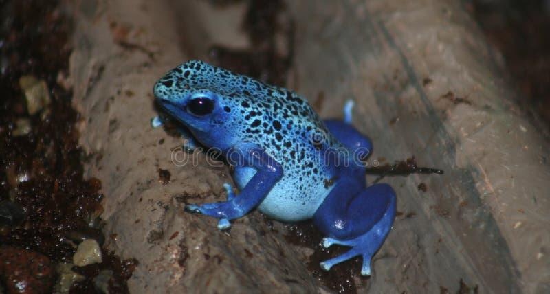 Download Kasta sig grodagift arkivfoto. Bild av djurliv, herpetology - 279606