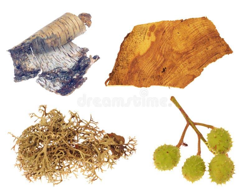Kastanie, Flechte, Birkenbaum und Holz getrennt lizenzfreies stockbild