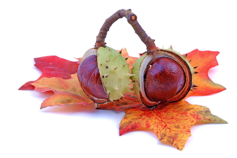 Kastanie und Blätter stockfotos