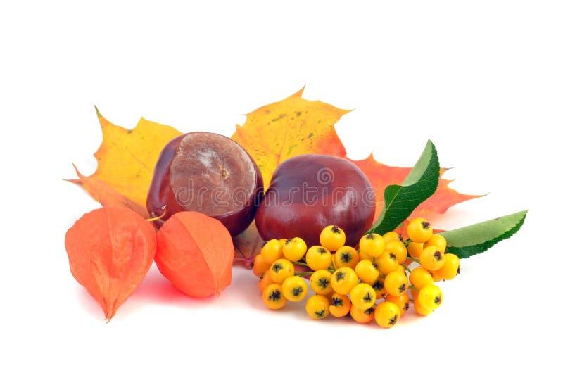 Kastanie und Blätter stockbild