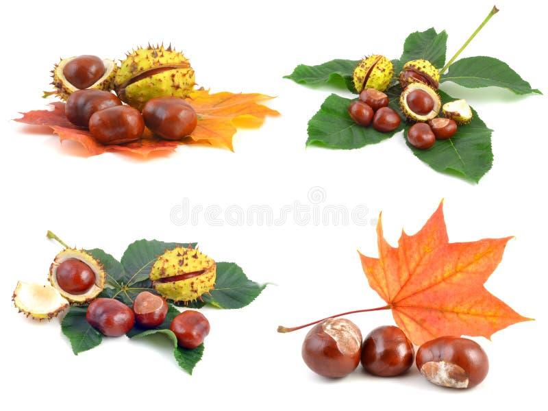 Kastanie und Blätter lizenzfreie stockfotos