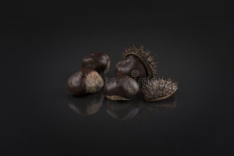 Kastanien auf Schwarzem Künstlerisches Rosskastanienfoto lizenzfreie stockbilder