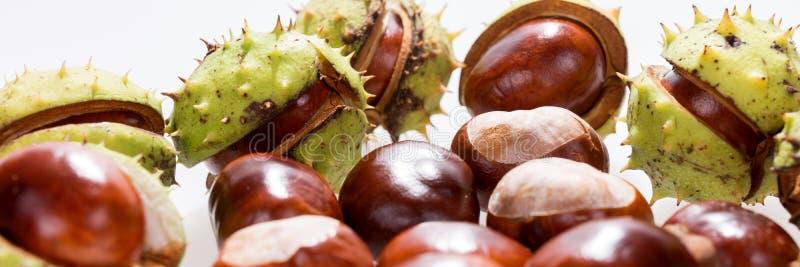 Kastanien lokalisiert auf Weiß, Früchte Kastanie, Panoramabild lizenzfreie stockfotos