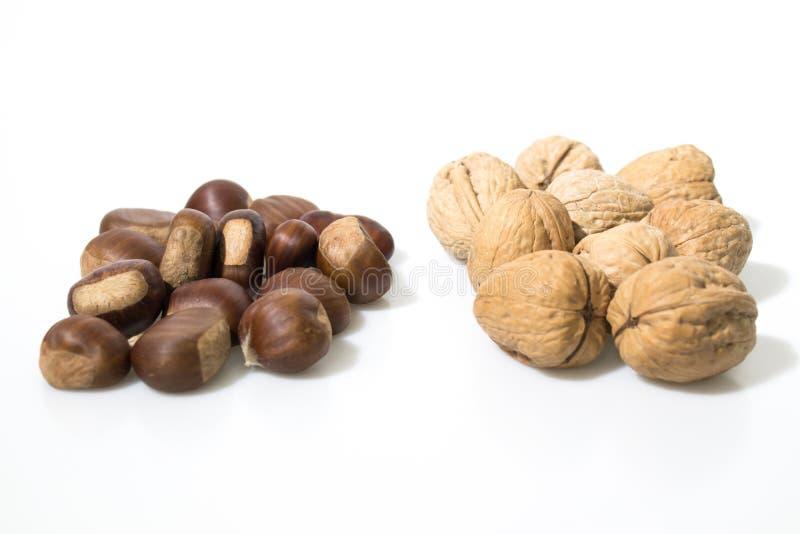 Kastanien und Nüsse lokalisiert in einem weißen Hintergrund lizenzfreies stockfoto