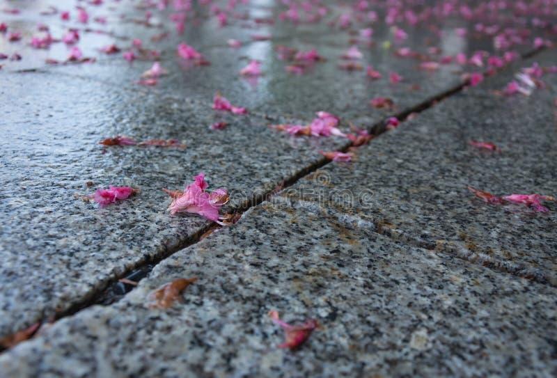 Kastanienblumen auf Granit lizenzfreie stockbilder