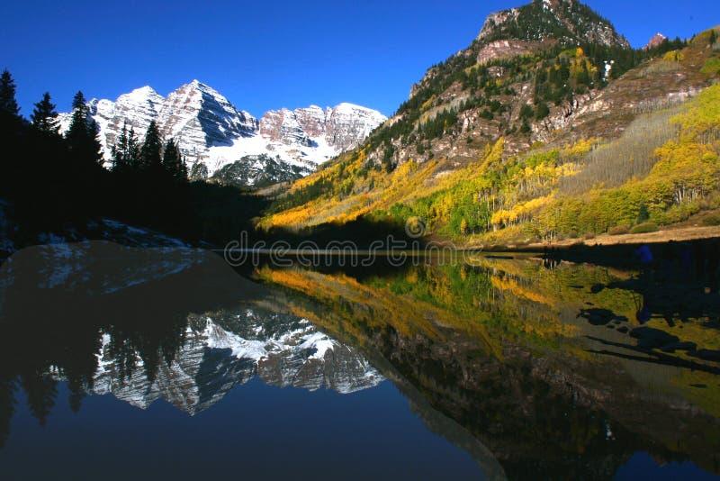 Kastanienbraune Bell-Reflexion stockfoto