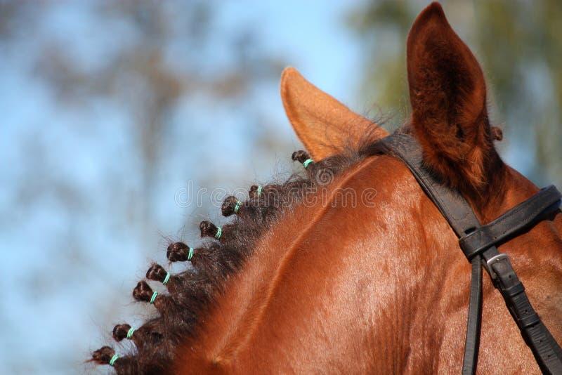 Kastanienpferdemähnenabschluß oben lizenzfreie stockfotografie
