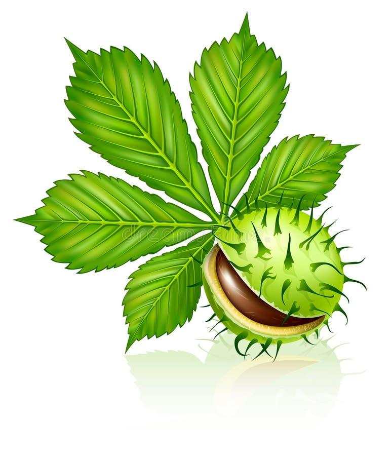 Kastaniestartwert für zufallsgeneratorfrucht mit dem grünen Blatt getrennt lizenzfreie abbildung