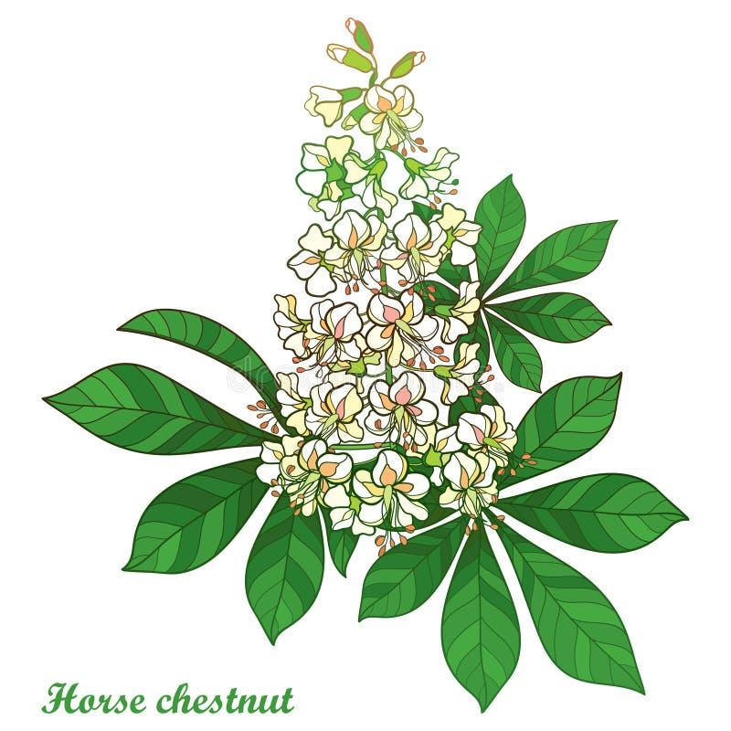 Kastanj för för vektoröversiktsBuckeye eller häst eller Aesculusblommagrupp i pastellfärgad vit med det utsmyckade gröna bladet s royaltyfri illustrationer