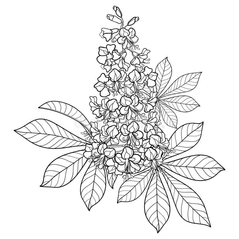 Kastanj för för vektoröversiktsBuckeye eller häst eller Aesculusblommagrupp med det utsmyckade bladet i svart som isoleras på vit vektor illustrationer
