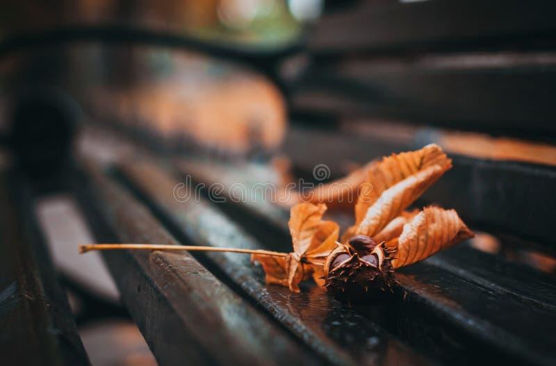 Kastanje en bladeren op de bank stock afbeeldingen