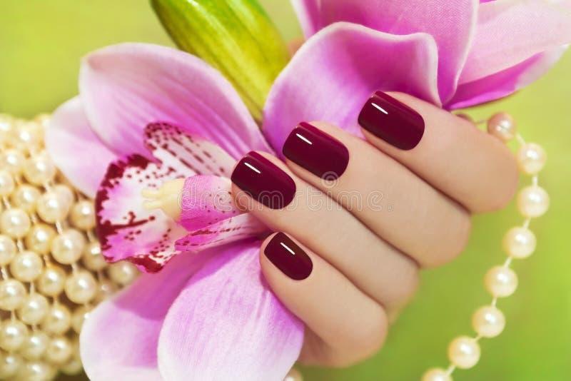 Kastanjebruine manicure. stock afbeeldingen