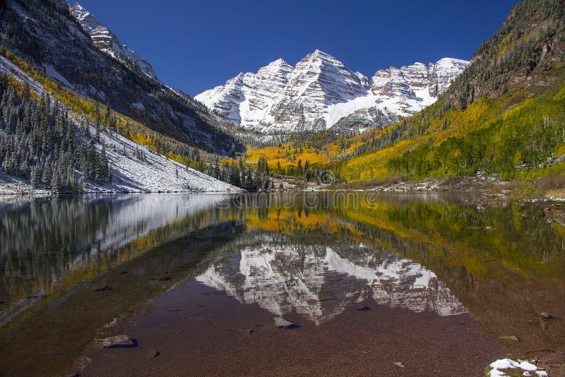 Kastanjebruine Schoonheden Colorado stock afbeelding