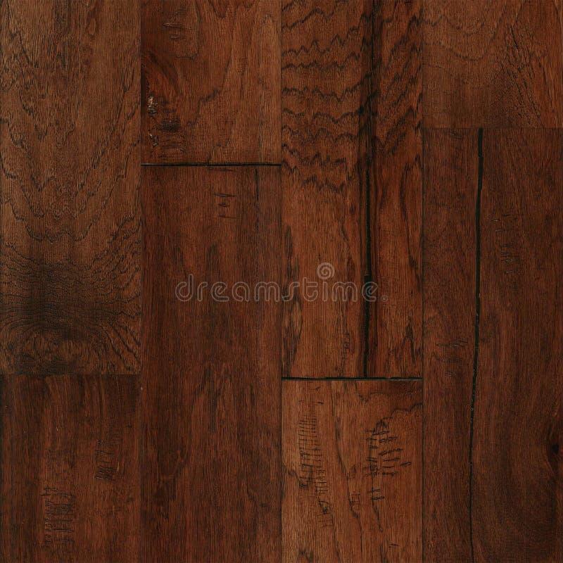 Kastanjebrun textur för Mohawkhickory royaltyfri foto