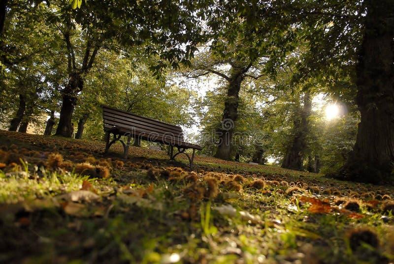 Kastanjebruna träd i hösten arkivfoton