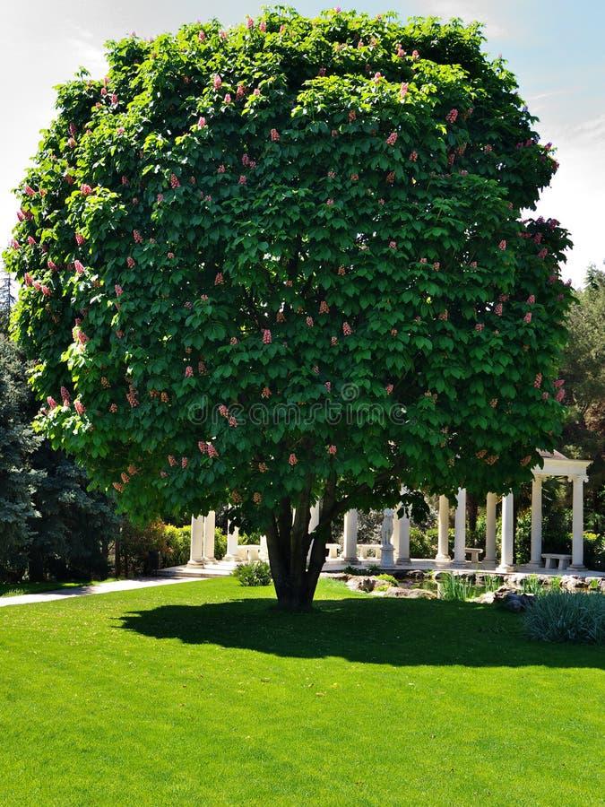 Kastanjebrunt träd för häst royaltyfria foton