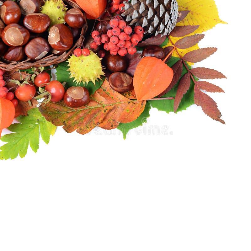 Kastanjes op de herfstbladeren royalty-vrije stock afbeeldingen
