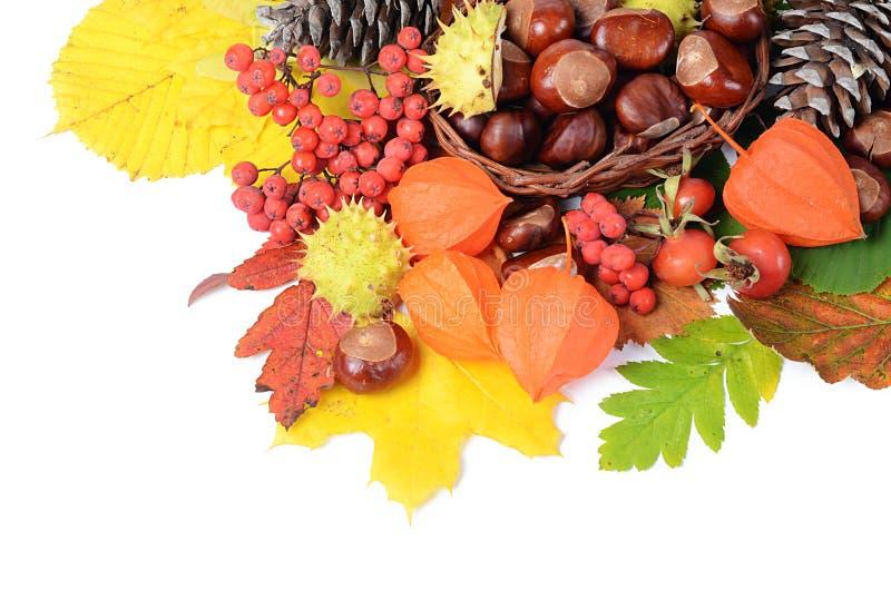 Kastanjes op de herfstbladeren stock afbeeldingen