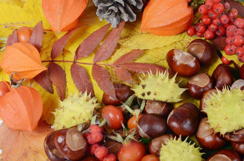 Kastanjes op de herfstbladeren stock fotografie