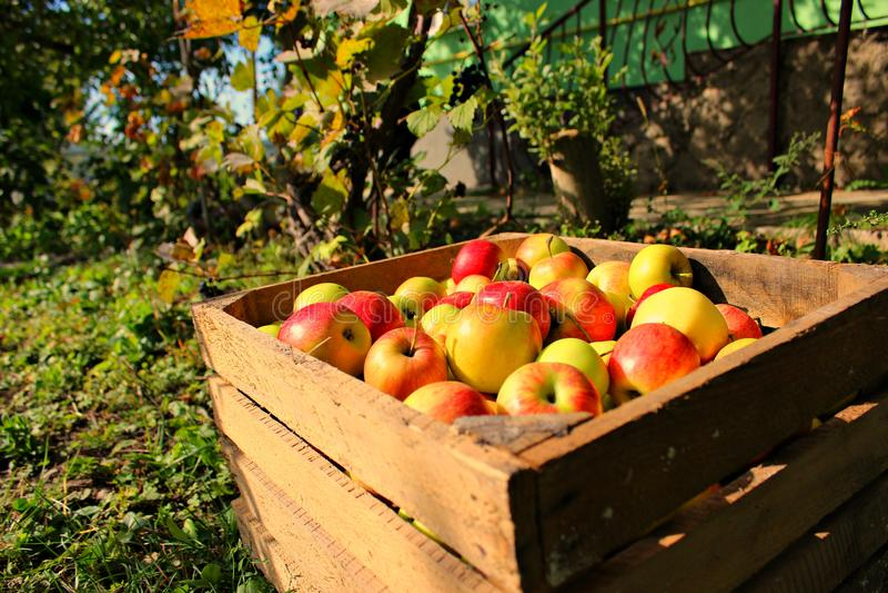 Kasten des Apfels stockfotos