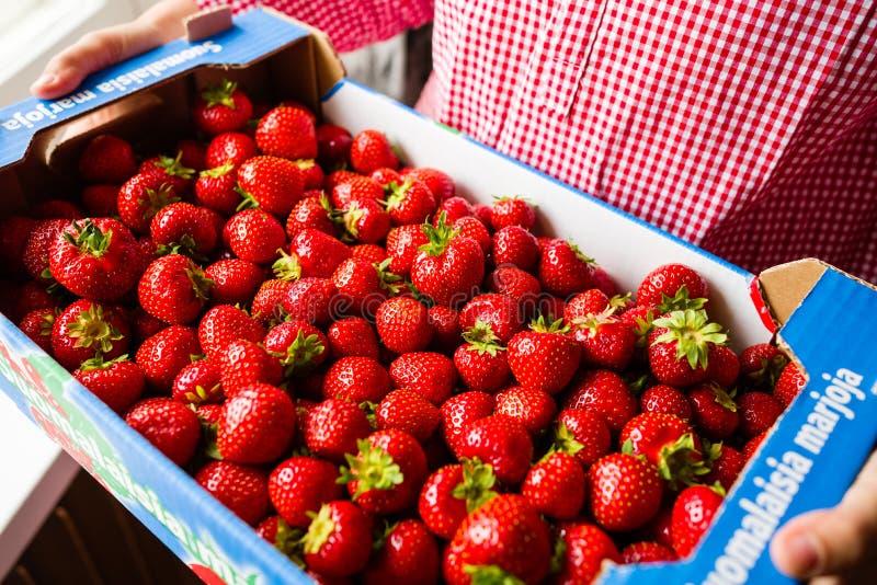 Kasten reife Erdbeeren stockbilder
