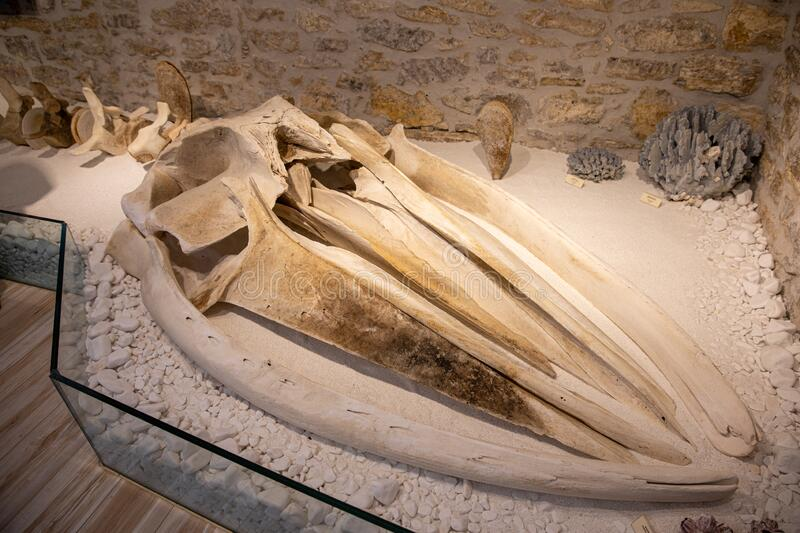 KASTOS,GREECE-August,2019:Marine Museum remains of the fin whale`s head or skull bones Balaenoptera physalus, also known. KASTOS island-August,2019:Marine Museum royalty free stock photo