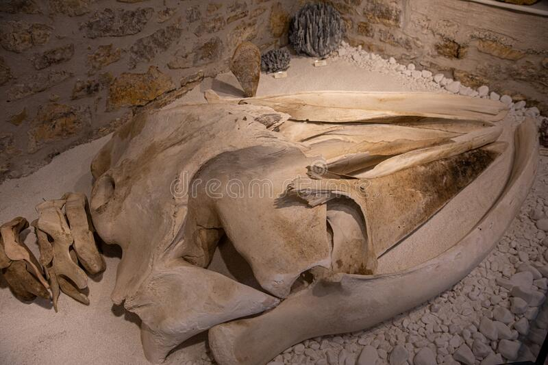 KASTOS,GREECE-August,2019:Marine Museum remains of the fin whale`s head or skull bones Balaenoptera physalus, also known. KASTOS island-August,2019:Marine Museum stock photo