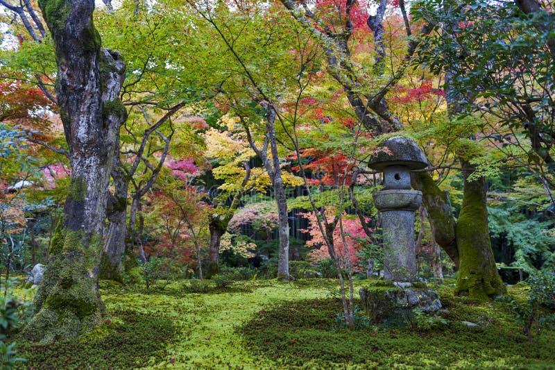 Kasuga doro或石头灯笼在秋天期间的鸡爪枫庭院里在Enkoji寺庙,京都,日本 免版税库存图片