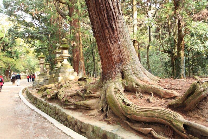 Kasuga Taisha Shrine, Nara,Japan royalty free stock photo