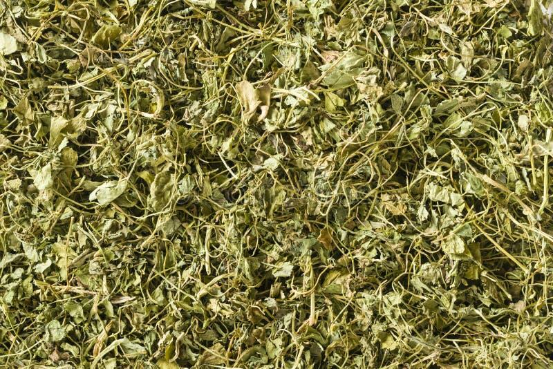 Kasuri Methi (hojas secadas de la alholva) imagen de archivo
