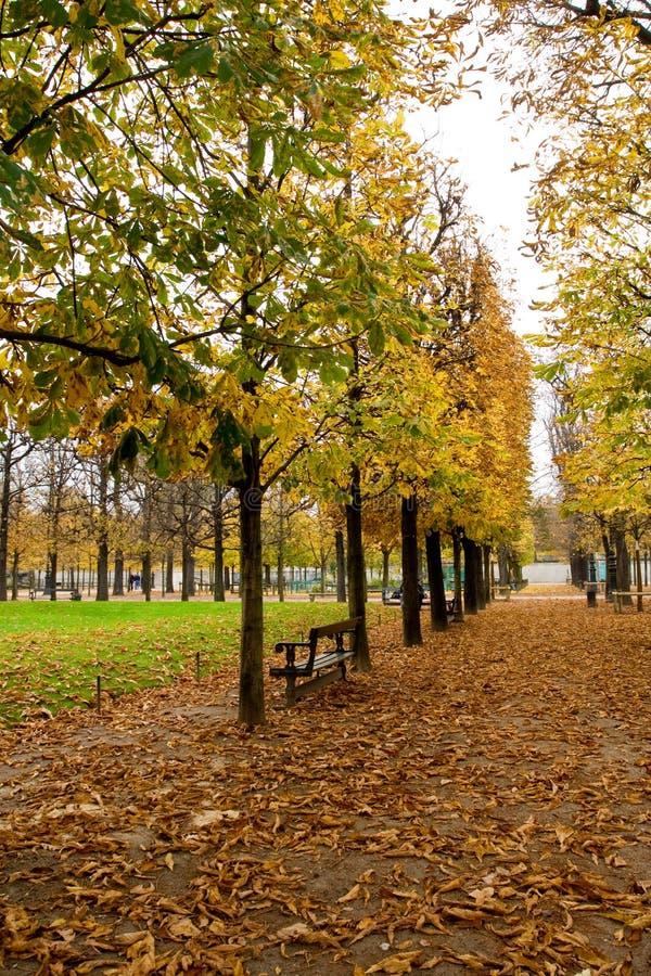 kasztan Paris avenue obraz royalty free