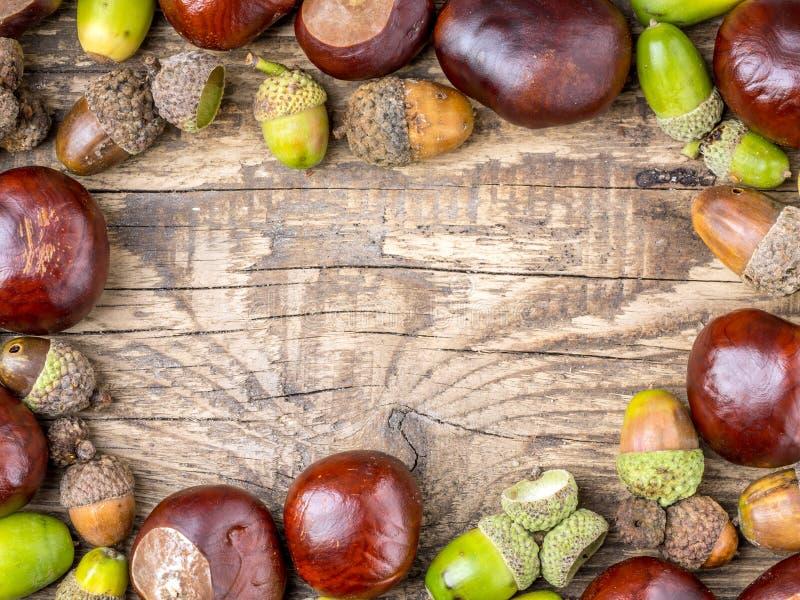 Kasztanu i acorn struktura zdjęcie royalty free
