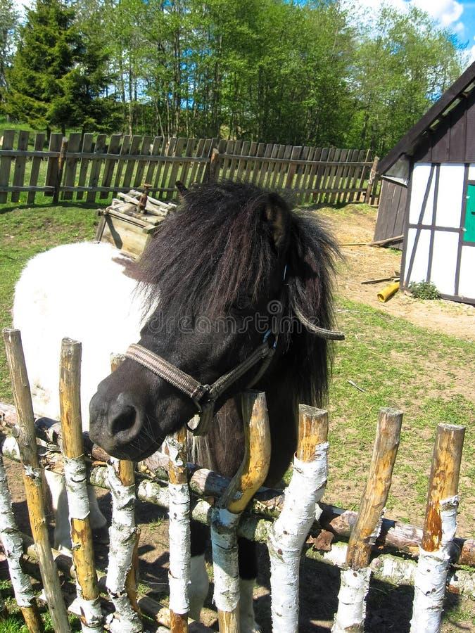 Kaszubski Miniature Park. Pony. Strysza Buda Mirachowo, Poland - May 03, 2014: Kaszubski Miniature Park. Pony stock photos