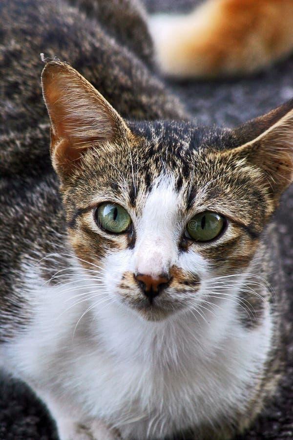 Download Kat stock afbeelding. Afbeelding bestaande uit dier, donker - 276333