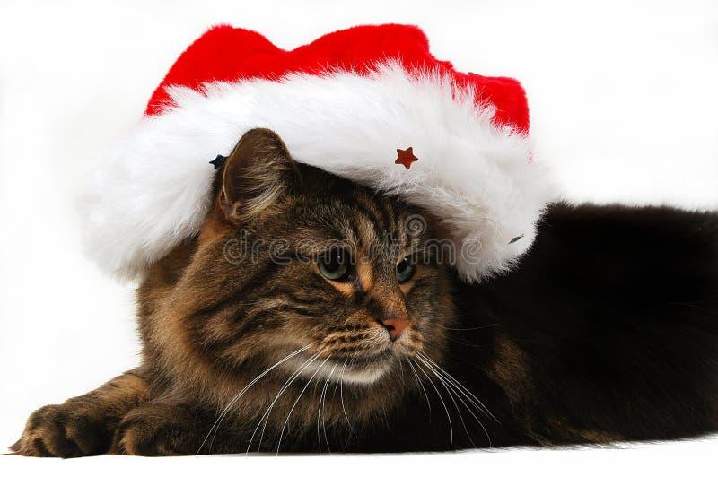 Kat 4 van Kerstmis stock afbeelding