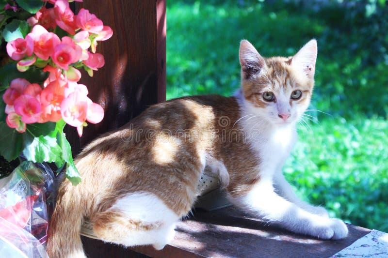 Kat stock afbeelding