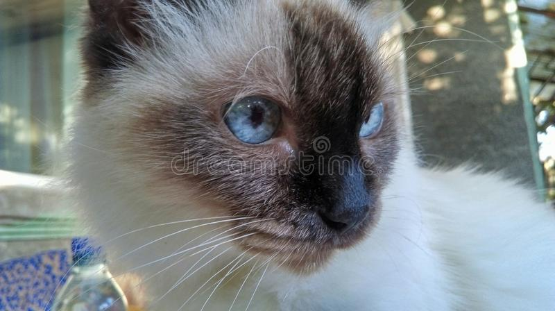 Kat royalty-vrije stock fotografie