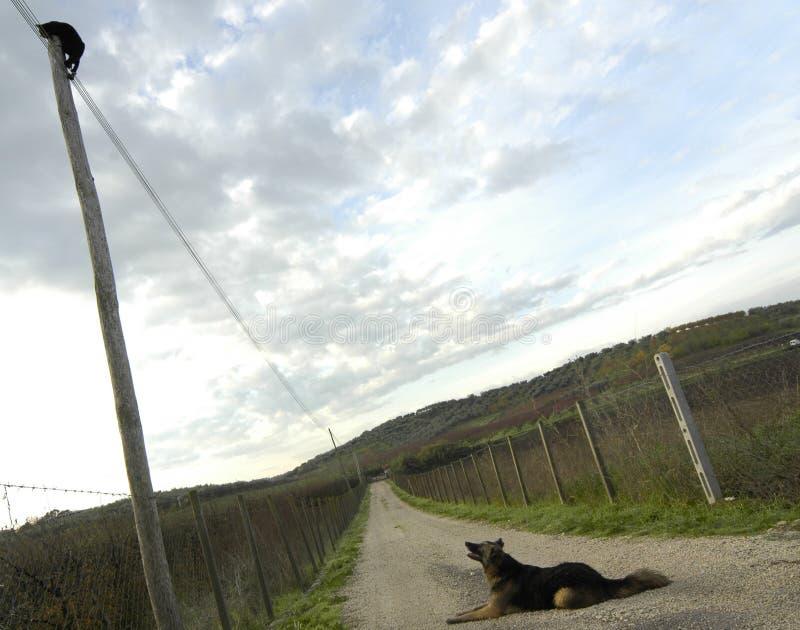 Kat & hond stock afbeeldingen