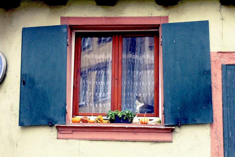 Kat bij het venster met Halloween-decoratie stock foto