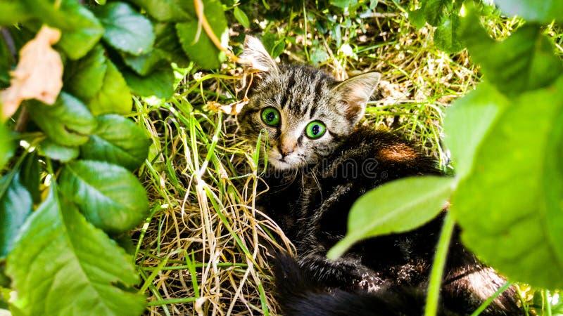 Kat, bloemen, groen gras, aard stock foto's