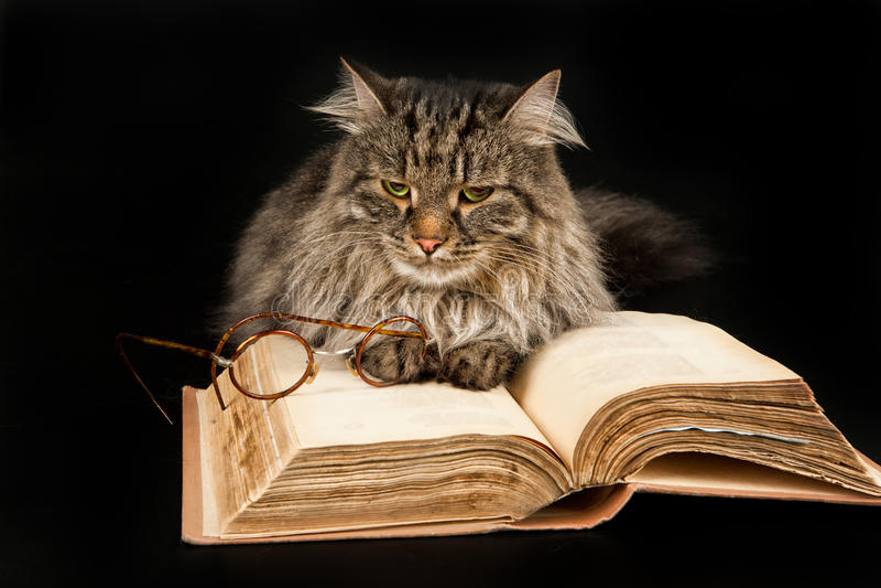 Kat, Boek en Glazen royalty-vrije stock afbeeldingen